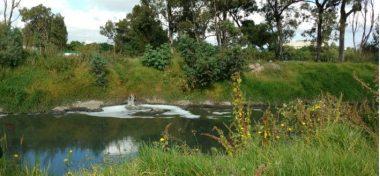 En peligro uno de los pocos remanentes del sistema lacustre de la CDMX