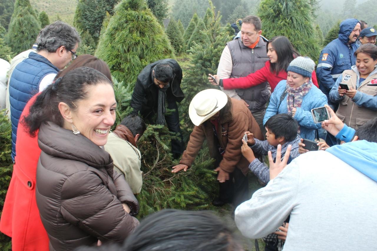 Arranca temporada de árboles de navidad