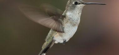 Hallazgo de un nido de colibrí detiene obra pública en EUA