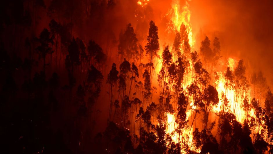 Un solo fuego, diversas causas: el incendio en Portugal