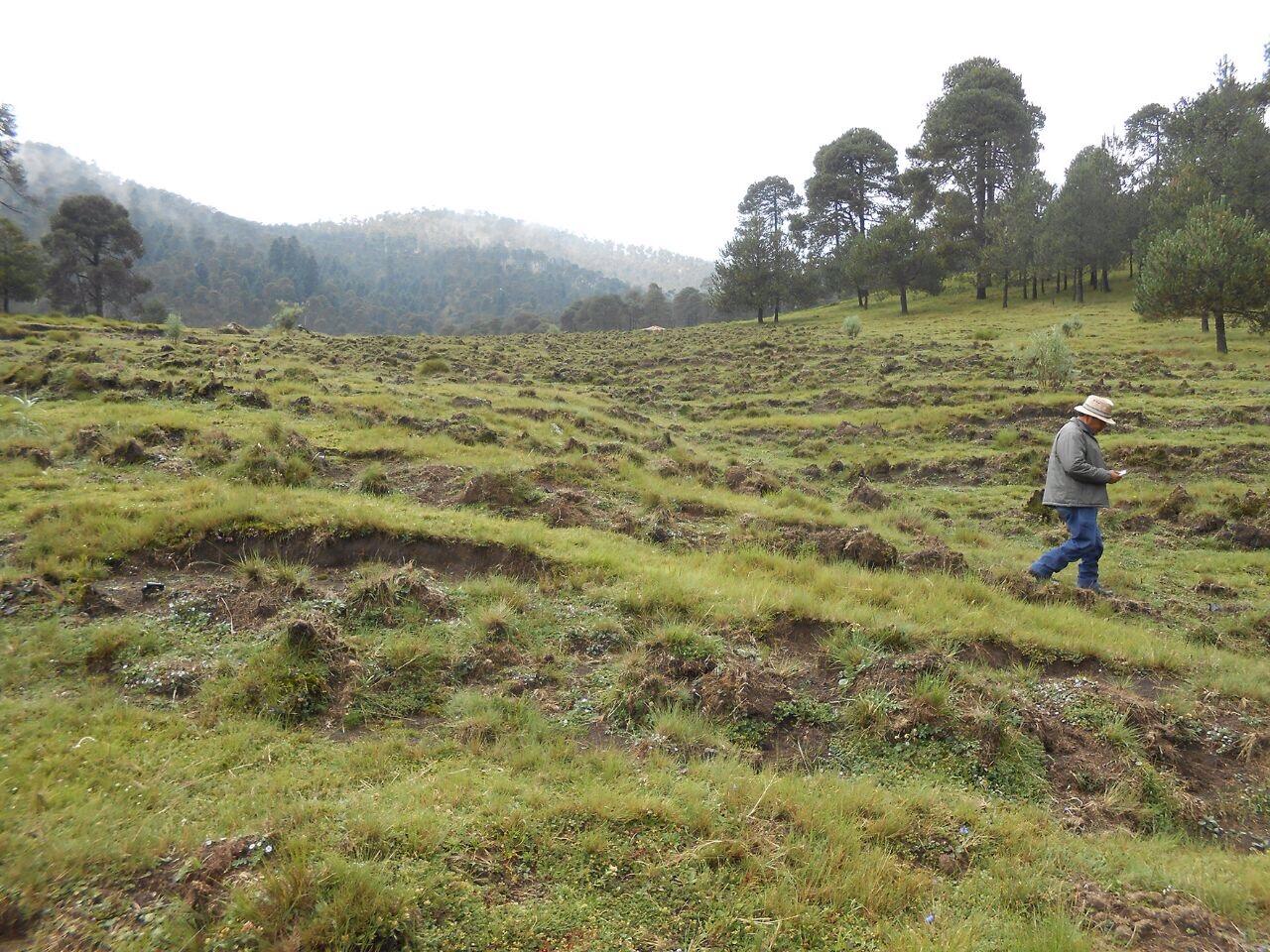 Rebasa plantación forestal en Tlalpan índice de sobrevivencia