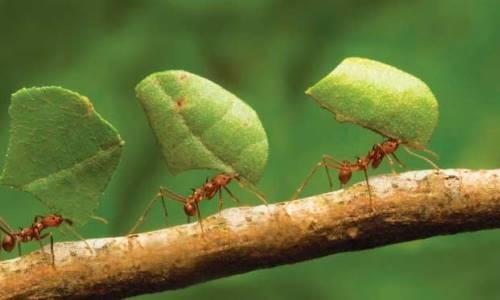 Hormigas son fundamentales para mantener el equilibrio en selvas tropicales