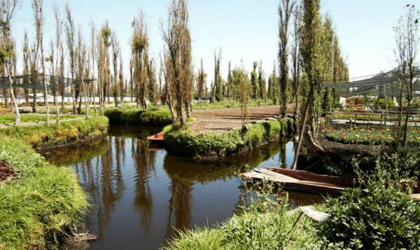 Chinampas de Xochimilco son reconocidas como Patrimonio Agrícola Mundial