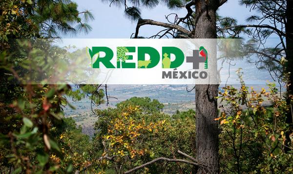 La orquestación de REDD+ en México