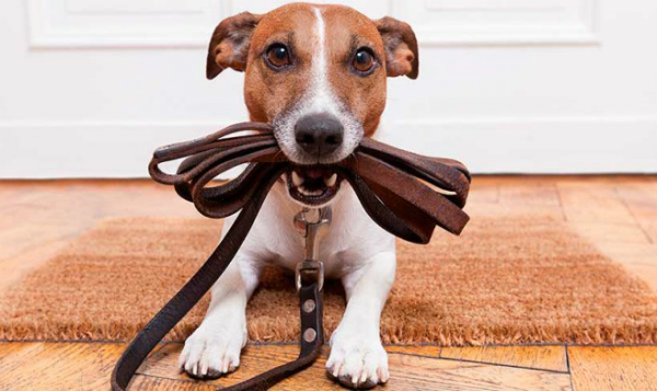 Cultura de cuidado a mascotas tiene nueva app