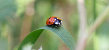 Gestionar la biodiversidad para enfrentar el adverso panorama ambiental