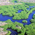 Humedales: 10 datos esenciales para reconocer la importancia y vulnerabilidad de estos ecosistemas