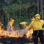 Incendios forestales y contaminación ambiental: el contexto del COVID-19 en México