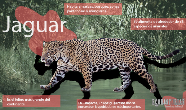 Día Internacional del Jaguar