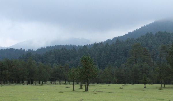 Hacen equipo 10 empresas para jornada de reforestación en Nevado de Toluca