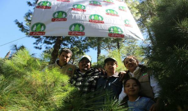 Producción mexicana de árboles de navidad: una actividad comunitaria, incentivada por instituciones, enfrenta el hábito de consumir los de Canadá y EUA