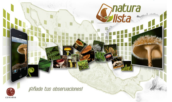 Naturalista, la red social del mundo natural