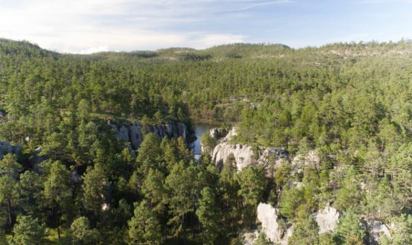 Durango: cuna de la cultura forestal y sede de foro internacional
