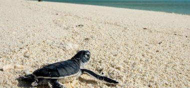Tortugas tendrán 30 hectáreas más para anidar en playas de Oaxaca