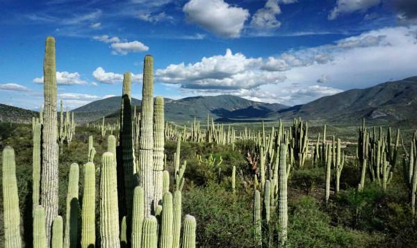 Valle de Tehuacán-Cuicatlán es patrimonio de la humanidad