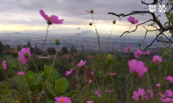 Rehabilitan Área Natural Protegida en Tlalpan