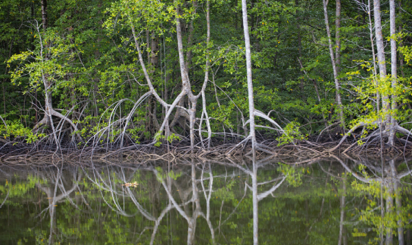 Manglares y pastos marinos ayudarían a países a incrementar su ambición climática