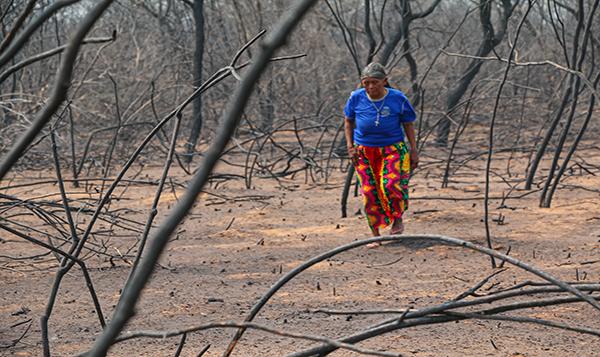 Incendios forestales alertan por daños socioambientales en las bioregiones del Chaco,  Amazonía y Delta del Paraná